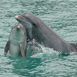 2013_08_20_dolphin120