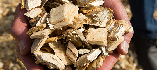 Biomass in the form of wood chips