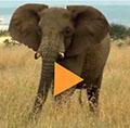 2013_10_Elephant_video_120