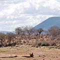 Image by Paul Shaffner, Iringa, Tanzania CC 2.0