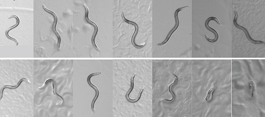 Images of worms